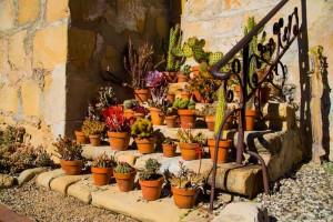 Dee_Kathy_Mission_Santa_Barbara_Succulent_Garden